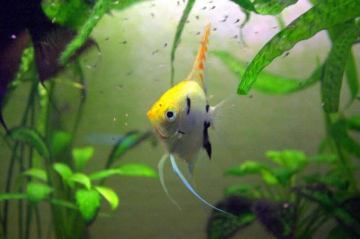 Balıkların Çoğalma Süreçleri